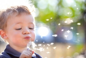 child blows dandelions
